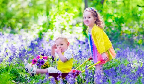 Kids gardening. Children playing outdoors. Little girl and baby boy, brother and sister, working in the garden, planting flowers, watering flower bed. Child pushing wheel barrow.